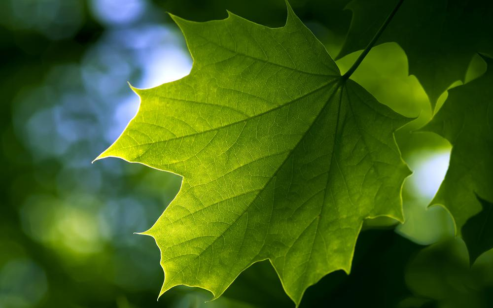 Green leaf eye widescreen desktop wallpaper