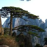 Huangshan welcoming pine hd wallpapers