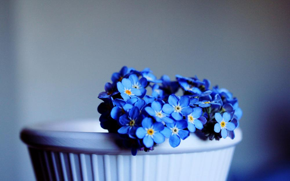 Beautiful blue flowers hd desktop wallpaper