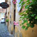 Leaves, flower, city, house, plant, street