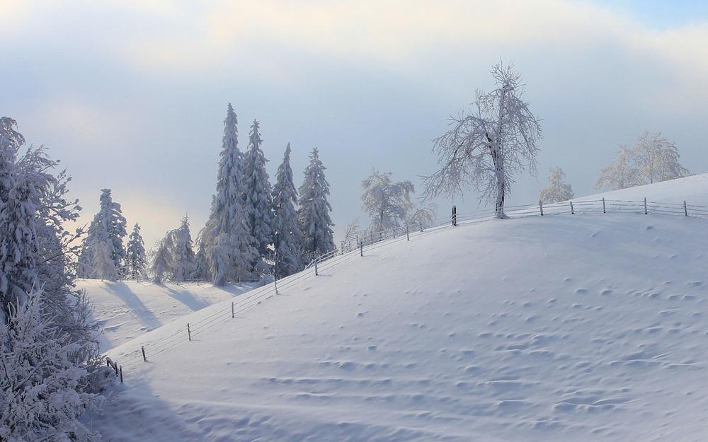 Winter snow trees fence landscape wallpaper
