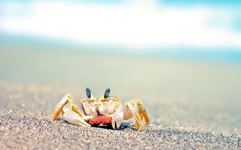 Lonely crab hd wallpaper