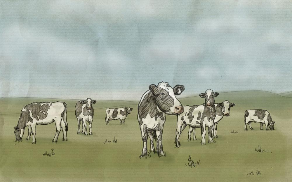 Milk, drawing, cows