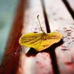 Autumn leaf quiet beauty aesthetic pictures hd wallpaper on the couch