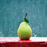 Rain pear fresh wallpaper hd