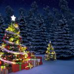Elegant, mood, christmas trees