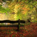 On the outskirts of lake autumn scenery wallpaper