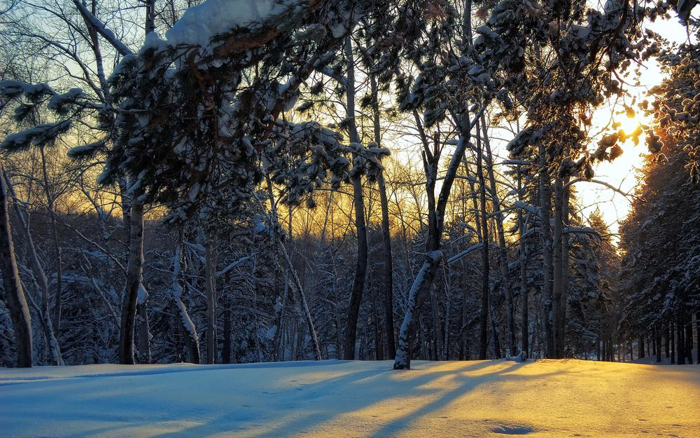 Trees on the snow