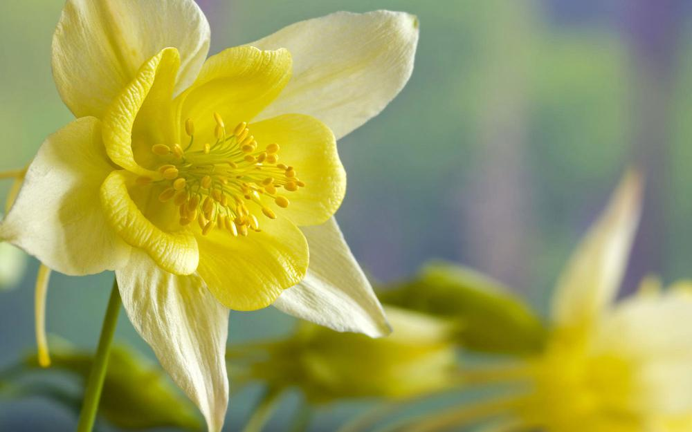 Yellow small fresh flowers hd wallpaper