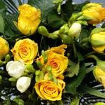Roses, leaves, flower, yellow, flowers wallpaper