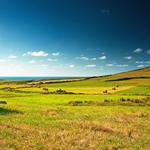 Beautiful grassland scenery desktop wallpaper