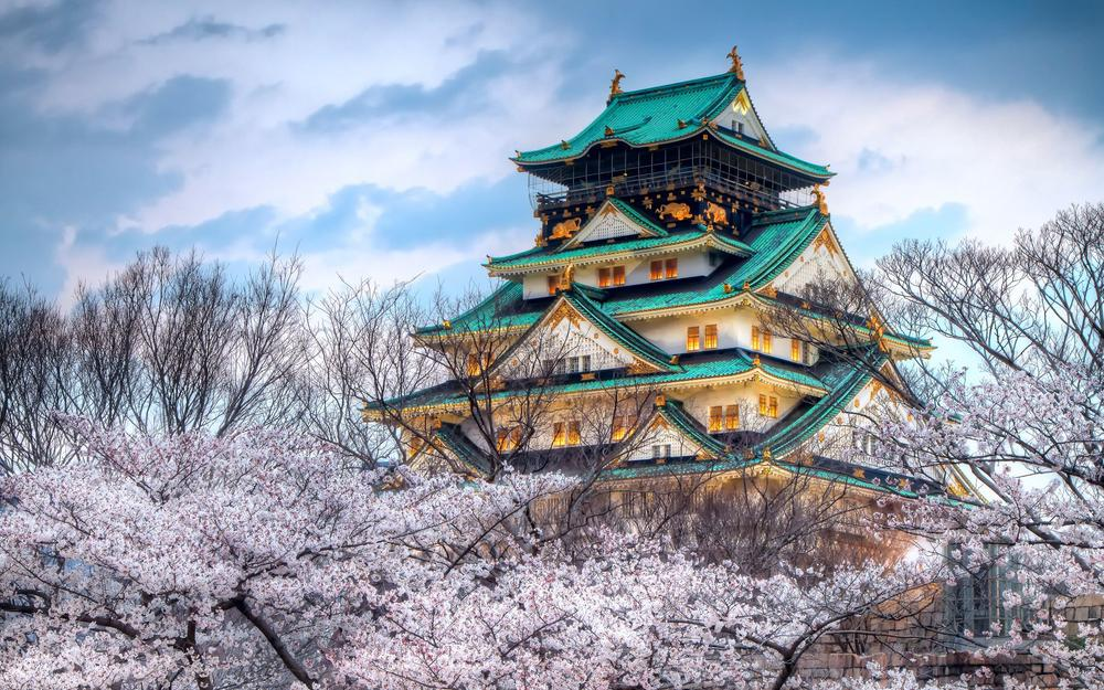 Japanese cherry hd wallpapers