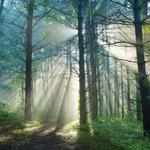 Nice sunny forest hd wallpaper