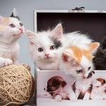 Kitten, ball of yarn, boxes, cute kitten wallpaper
