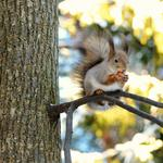 Friendly squirrels, woodpeckers, animals, forests, trees, cute animal desktop wallpaper