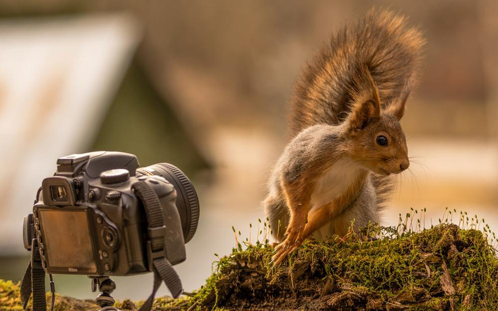 Stumps, moss, squirrels, camera, curious, cute posture, movement facial expressions, best actor, animal desktop wallpaper