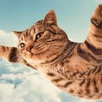 Meow star people, cats, flying in the sky, air, flying dreams, cute animal desktop wallpaper