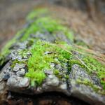 Small fresh green dead wood on high-definition desktop wallpaper
