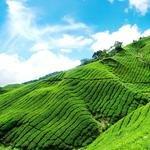Blue sky and white clouds green tea hd landscape wallpaper