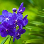 Green orchid hd wallpaper download
