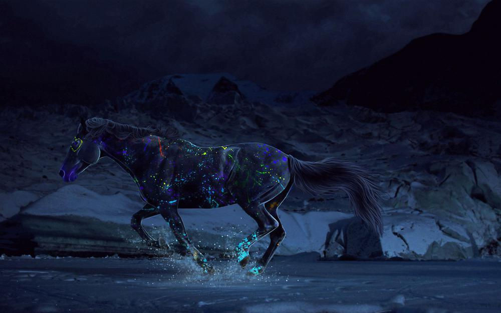 Horse, paints, gallop, water