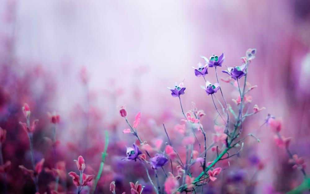 Flower, purple, pink, flowers, wallpaper