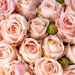 Flowers, roses, bouquets, pink roses, wallpaper