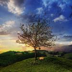 Sunset, fox, grass, sleeping, evening, hill, tree