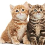 Two kittens, sitting, staring, cute kitten wallpaper