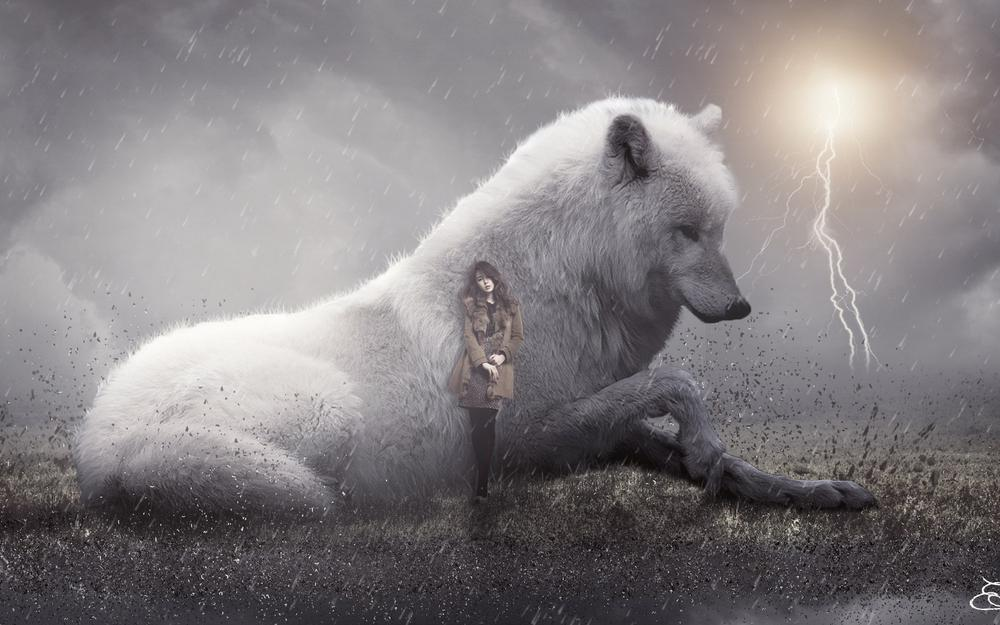 White wolf and the beauty of hd super beautiful wallpaper