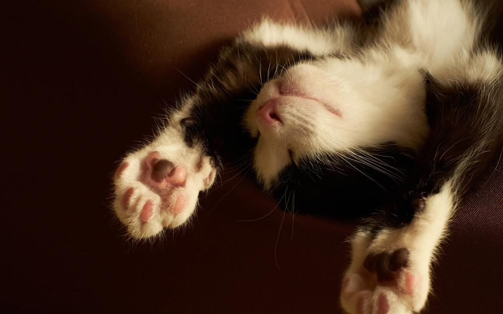 Weekend, people want to sleep a little, kitten paws, sleeping, black and white cat wallpaper