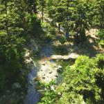 Forest, river, trees, stream, art, top view, stones