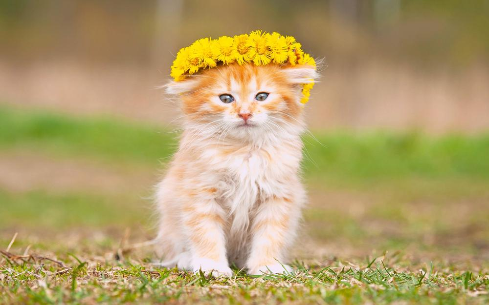 Kitten baby, adorable, fluffy, flowers, wreaths pictures, wallpaper