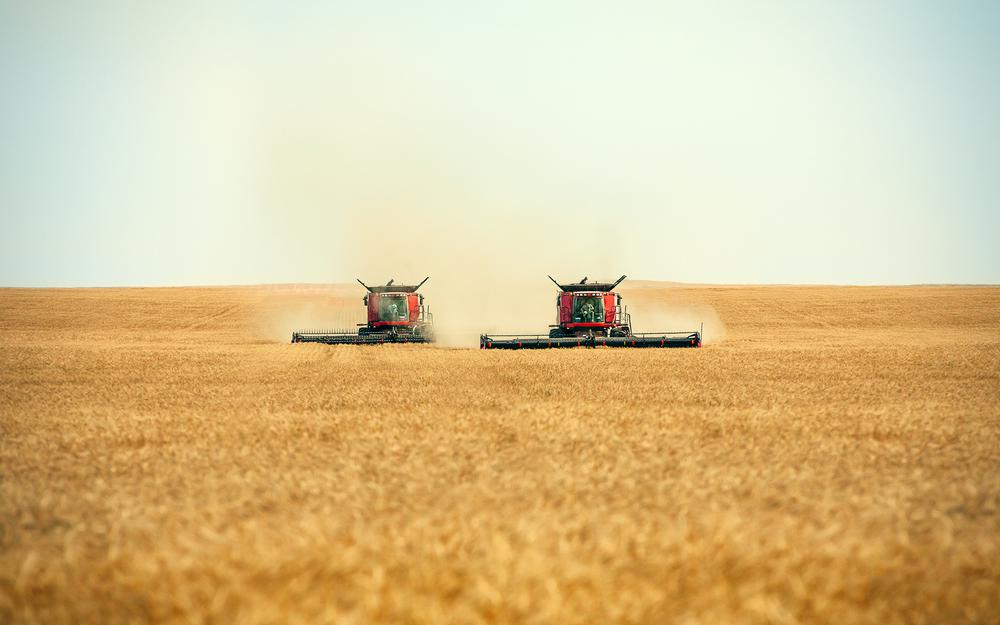 Cutting, harvesters, a pair of combines, workers, combines, swath