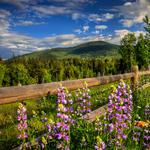 Fence, spring, road, forest, mountains, nature, flowers