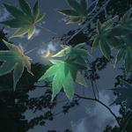 Anime, light, crescent, the garden of words, cartoon evening, garden of words, night, leaves, sky, clouds, branches, moon