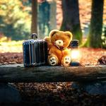 Forest wooden bench leaves suitcase cute teddy bear wallpaper