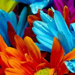Blue, red, blue, yellow, yellow, flowers