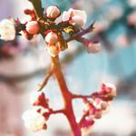 Spring, branches, macro, leaves, buds, plants, nature