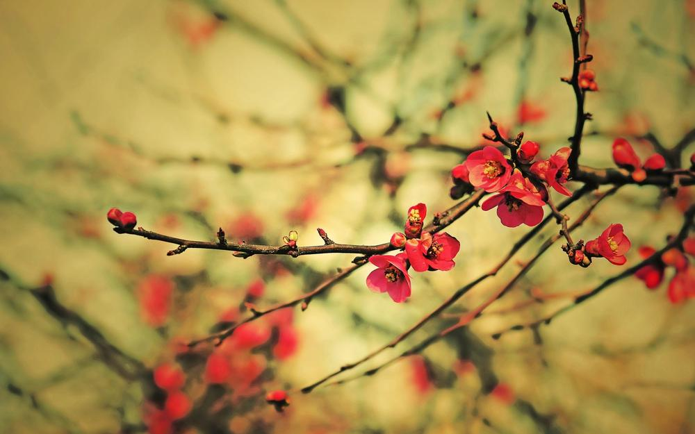 Spring buds, flowers, branches