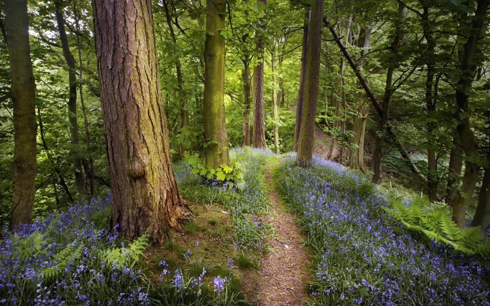 Nature, fern, trail, trees, pathway, trunks, forest, spring, flowers