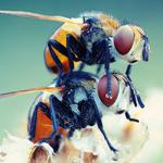 Insect, flies, couple hd wallpaper