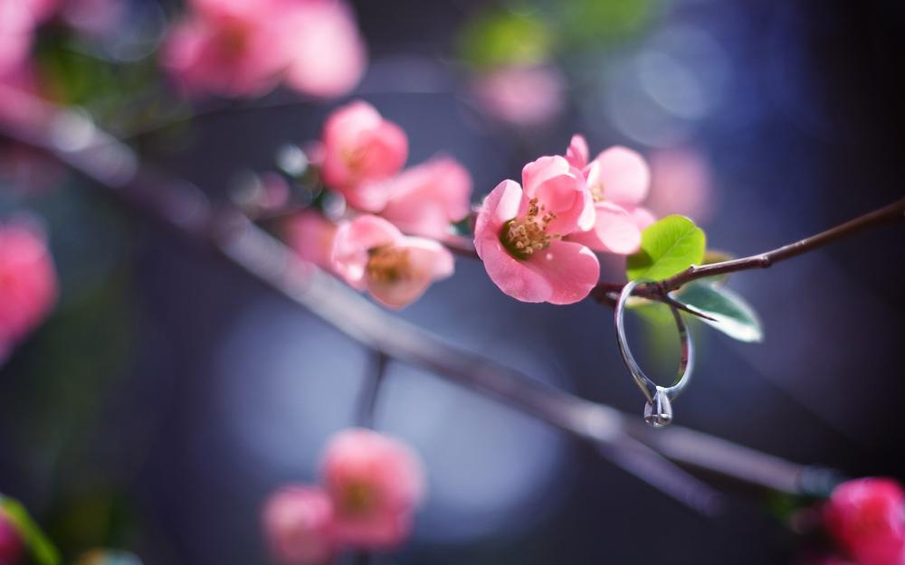 Pink, petals, branch, circle, close-up, leaves, nature, blurring, spring, flower, branch, light, glare