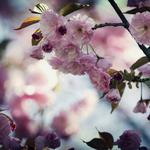 Leaves, spring, branches, plants, petals, tenderness, flowers