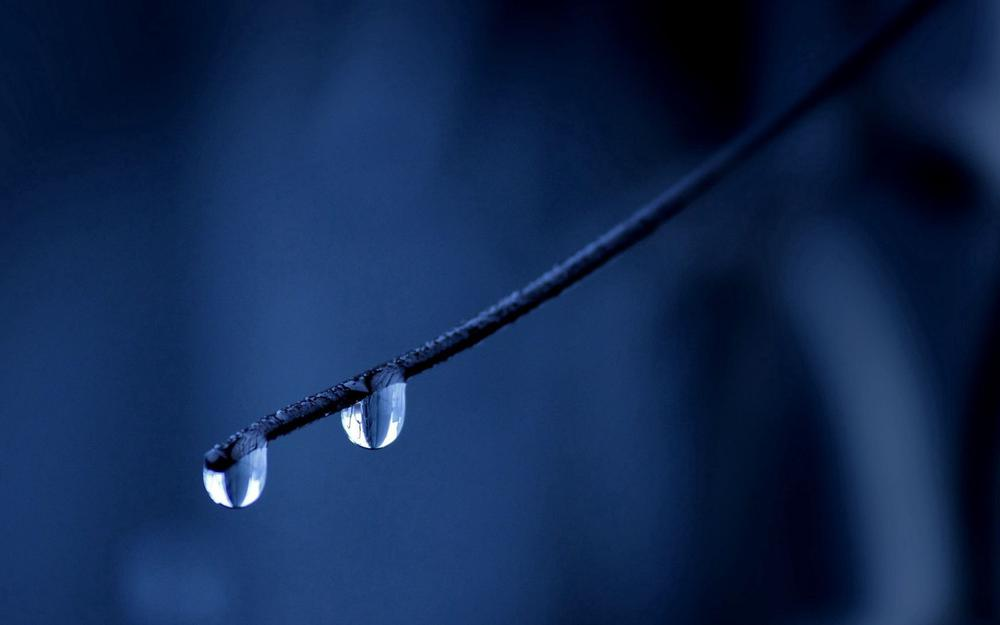 Background, branch, drops