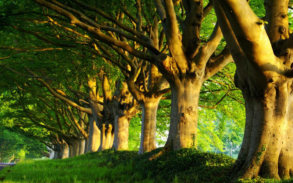 Tree, trees, grass, woods, morning, summer, greens, road, spring, freshness, nature