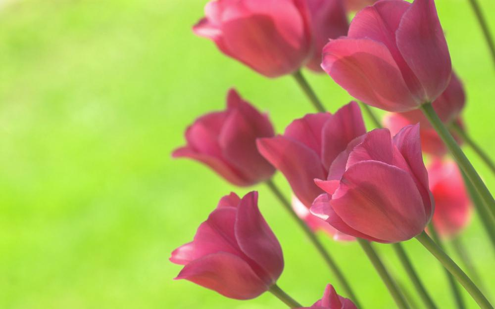 Green, spring, tulips, bright colors
