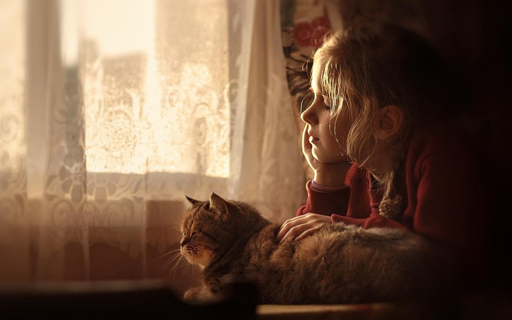 Girl, a cat, friendship, window, daydreaming, warm and lovely wallpaper