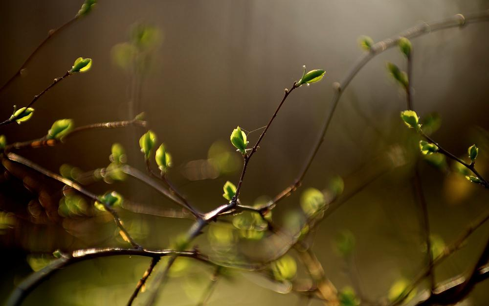 Close-up, blur, branches, vegetation, leaf, beautiful, leaves, plant, bokeh, leaves, leaves