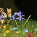 Eggs, chocolate rabbits, flowers, easter